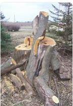 stump removal services Sydney